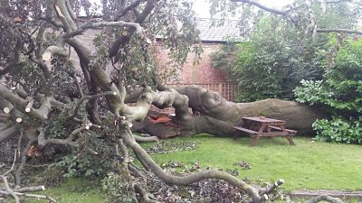 fallen tree - storm damage