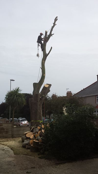 dismantling a tree