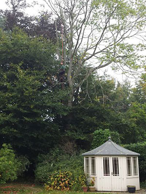 tree standing over summer house in garden