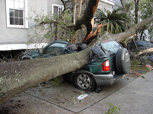 Fallen tree on car